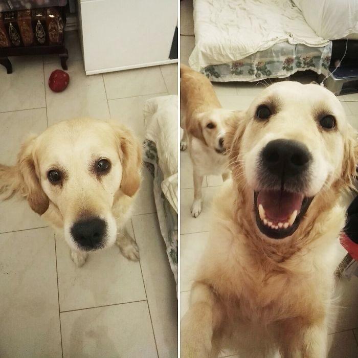 Perro sonriendo a su dueño