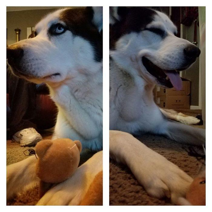 Mascotas antes y después que les dijeran son BUENOS CHICOS
