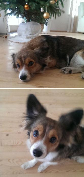 Perro escuchó algo