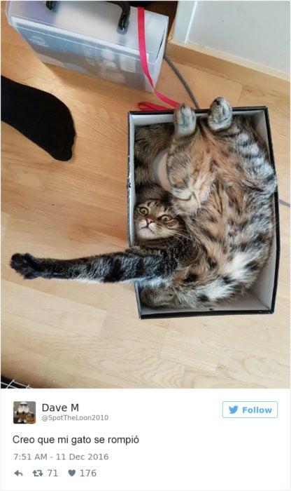 Tuits gatos 2016 -gato desacmodado