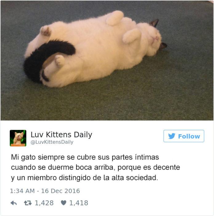 Tuits gatos 2016 - gato dormido