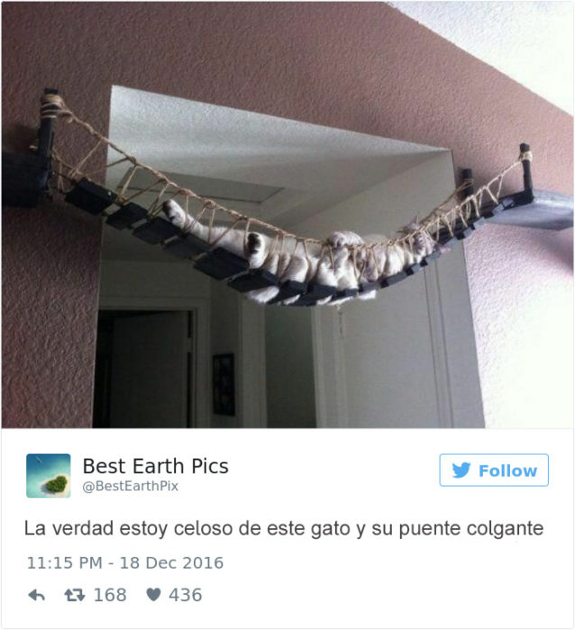 Tuits gatos 2016 - gato en puente colgante