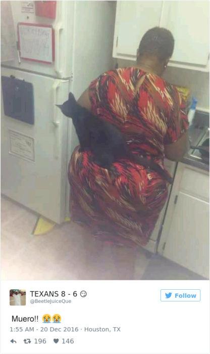 Tuits gatos 2016 - gato en el trasero de una señora