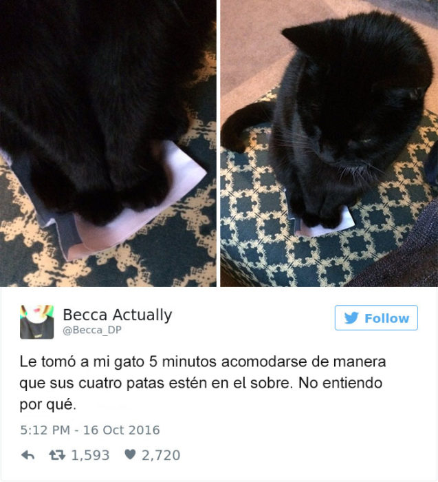 Tuits gatos 2016 - gato en un sobre