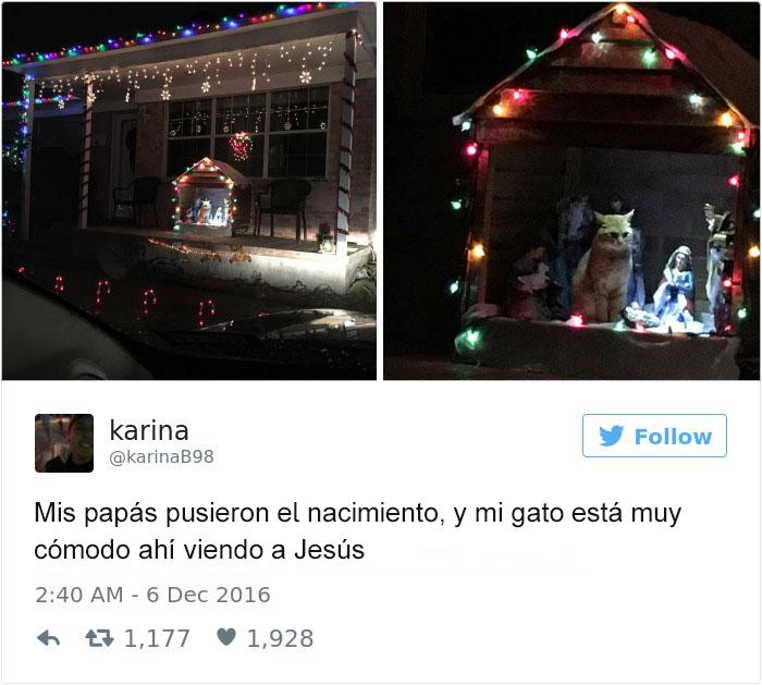 Tuits gatos 2016 - gato en el pesebre