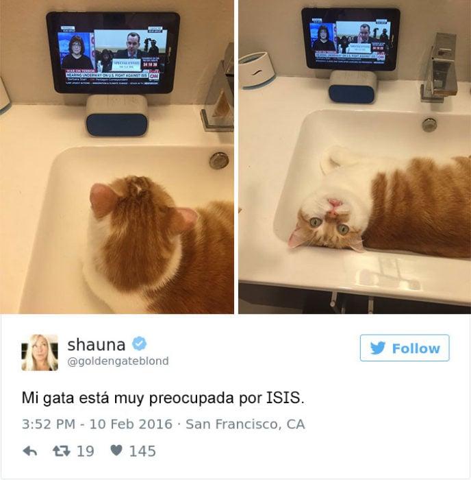 Tuits gatos 2016 - gato viendo noticias