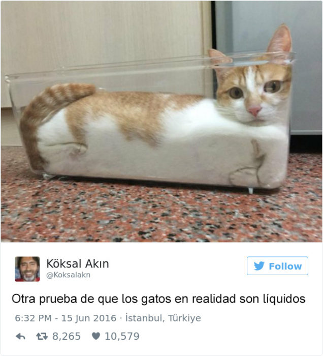 Tuits gatos 2016 - gato adentro de un recipiente