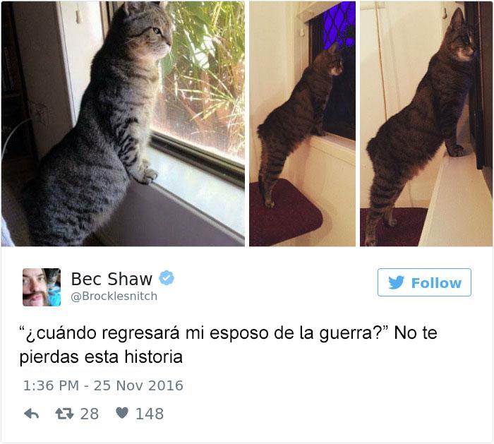 Tuits gatos 2016 - gato esperando en la ventana