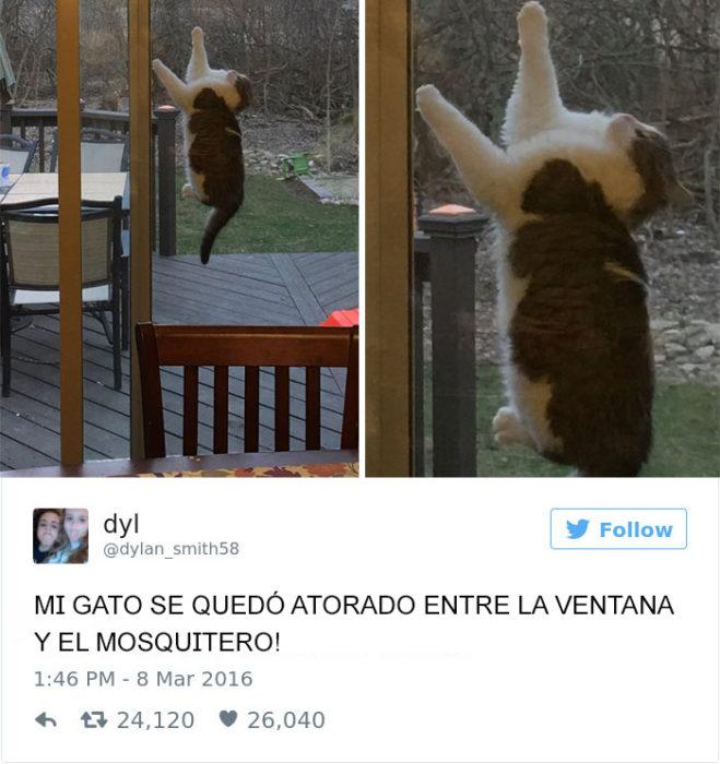 Tuits gatos 2016 -gato atorado en la ventana