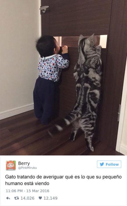Tuits gatos 2016 - gato asomado por la puerta