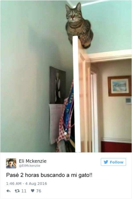 Tuits gatos 2016 - gato en el marco de una puerta