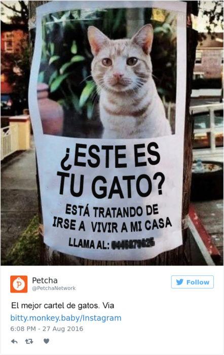 Tuits gatos 2016 - poster de gato encontrado