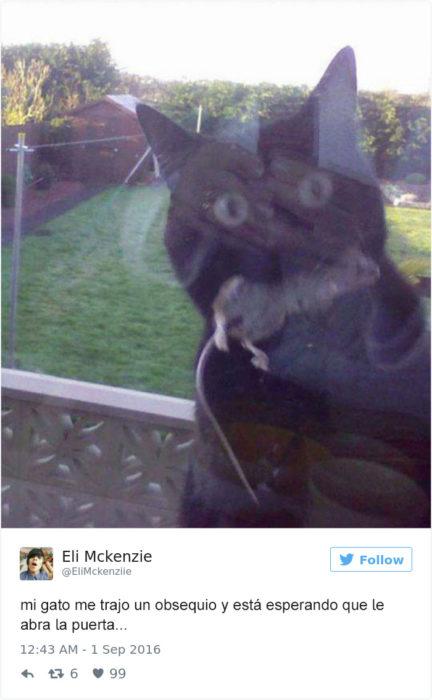 Tuits gatos 2016 - gato con ratón en la boca