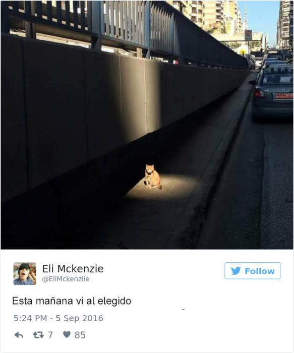 Tuits gatos 2016 - gato en medio de la luz