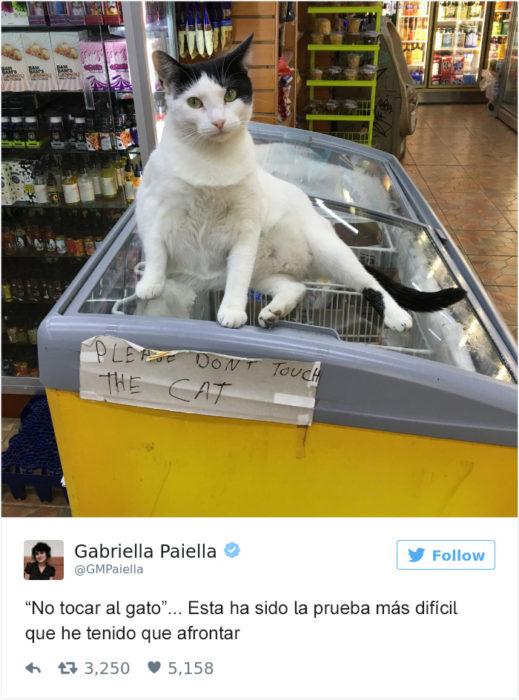 Tuits gatos 2016 - gato sobre nevera