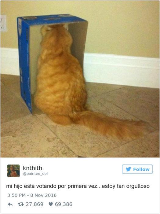 Tuits gatos 2016 - gato en una caja