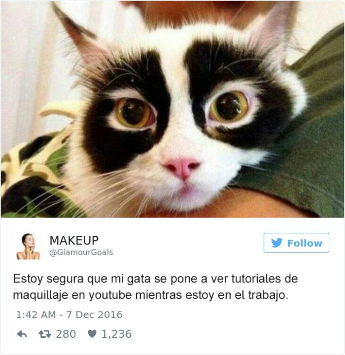 Tuits gatos 2016 - gato con ojos negros ahumados