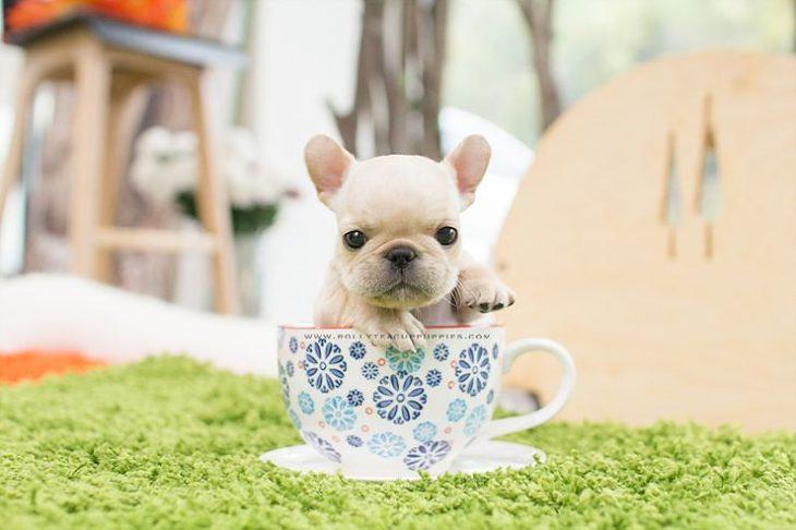 Perro blanco en taza de té