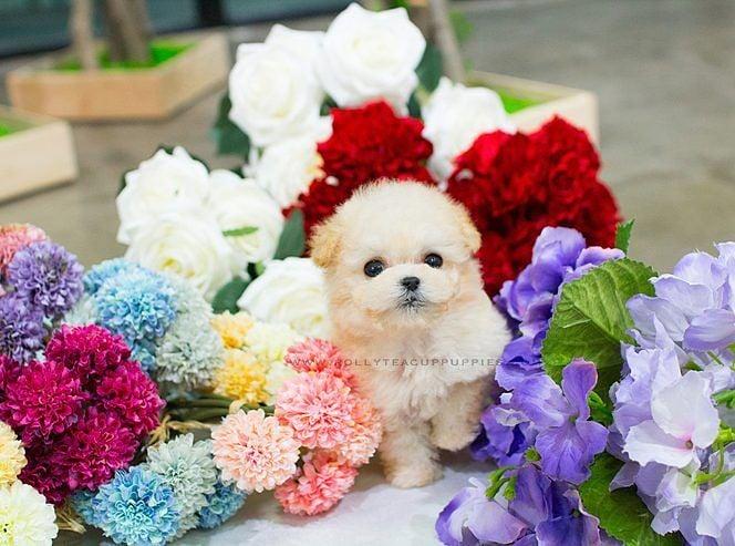Perrito en medio de flores gigantes