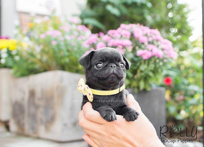 Perro chiquito negro con collar amarillo