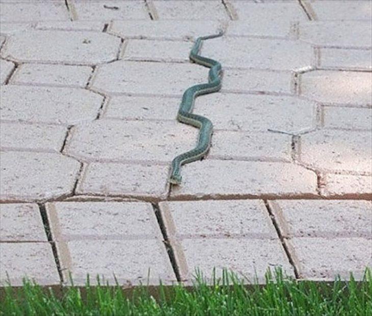 serpiente avanzando perfectamente