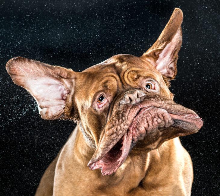 Perro captado en cámara lenta