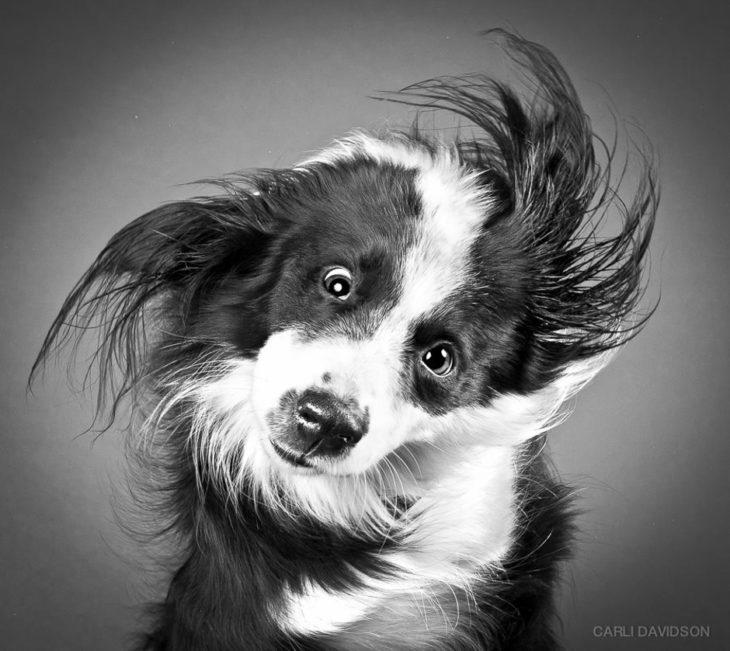 Perro captado mientras sacude su cabeza