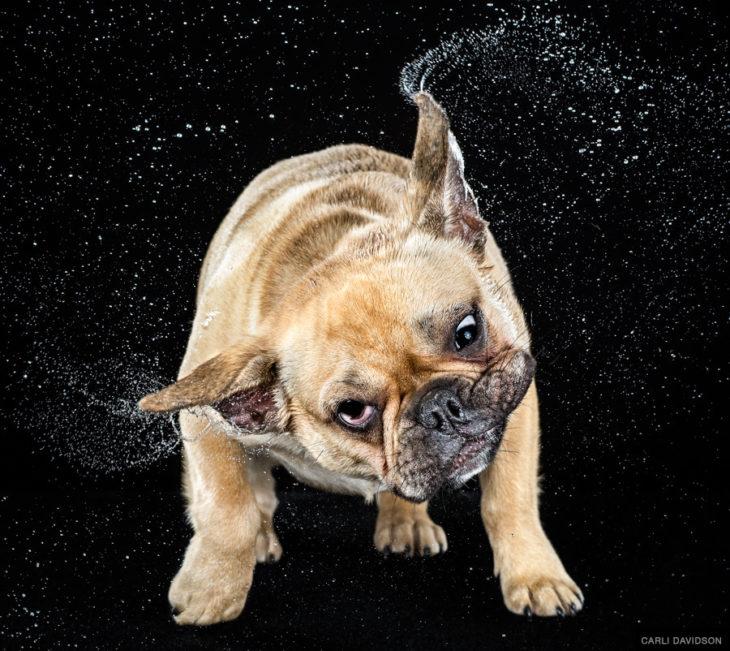 Perro en cámara lenta que parece enojado