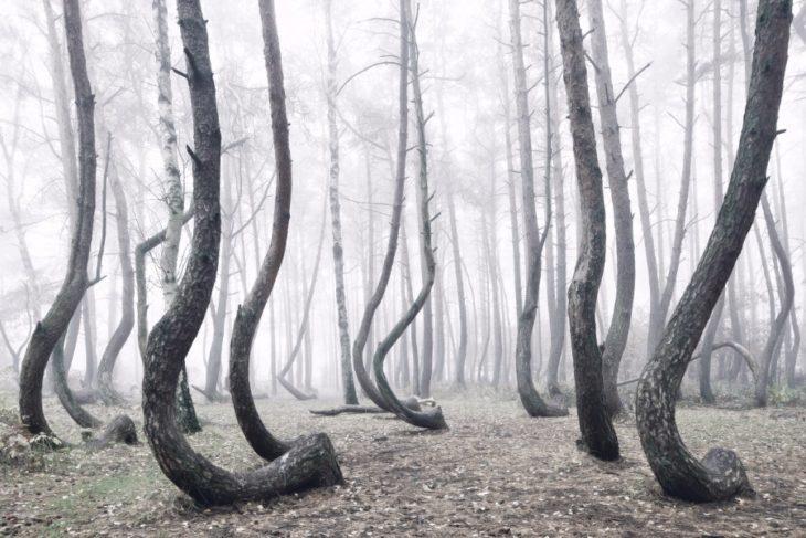 bosque curvo
