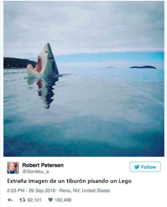 tiburón pisando un lego