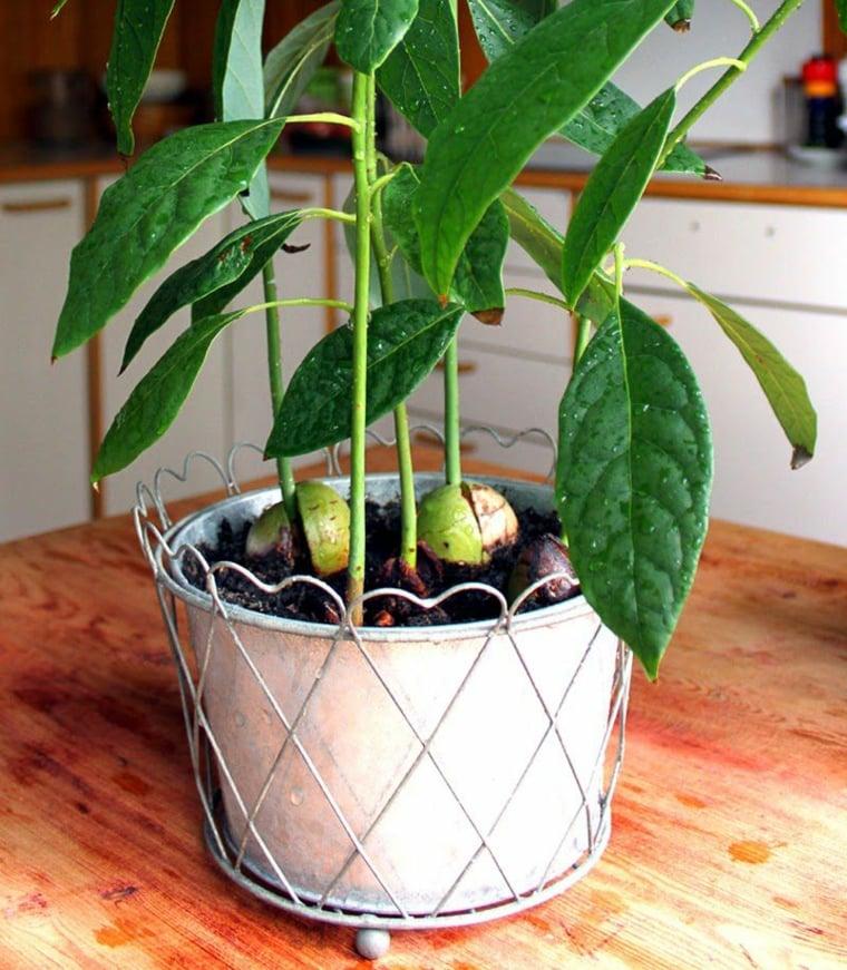 10 hortalizas del patio de tu casa a tu paladar claro que for El mejor arbol para plantar en casa