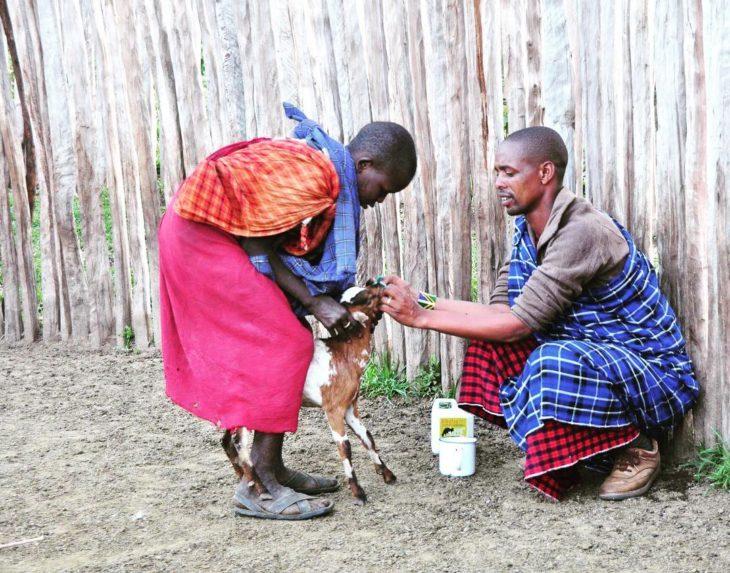 papá e hijo alimentando a una cabra