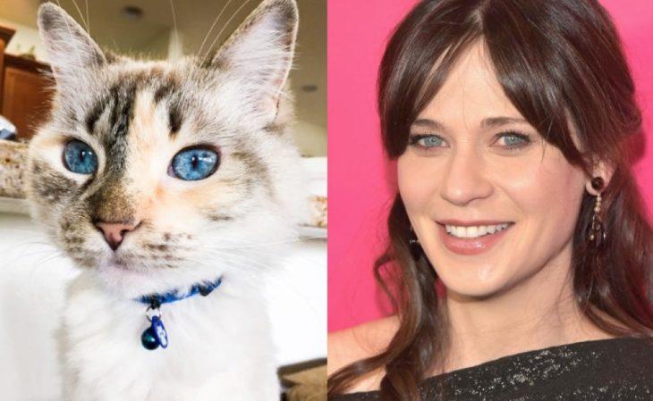 Zoe deschanel y un gato
