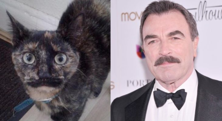 tom selleck y su gato