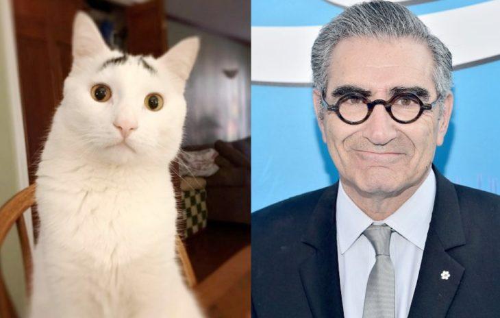 gatos que se parecen a famosos