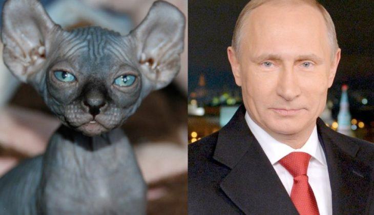 gato que se parece a vladimir putin