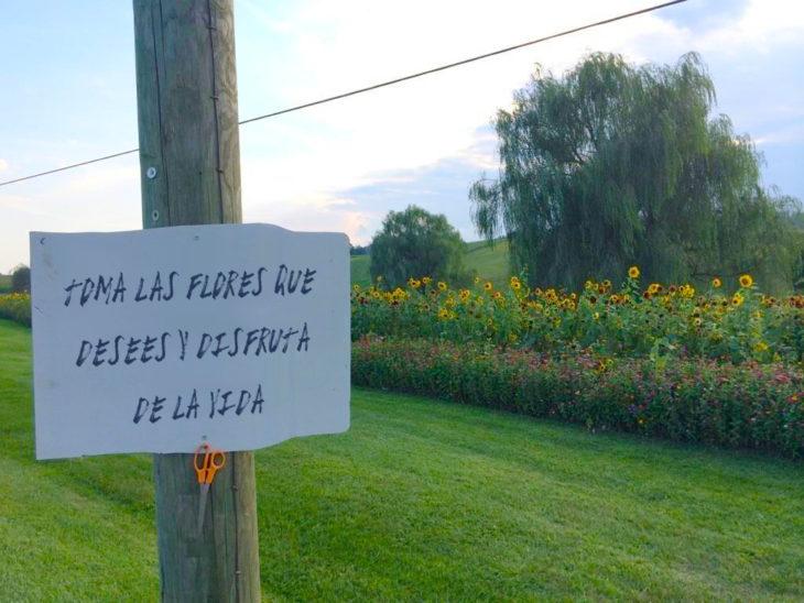 campo de flores con un cartel