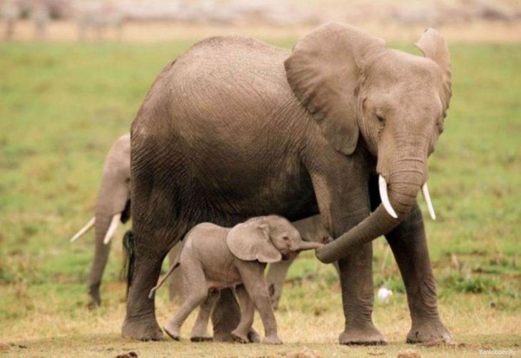 mamá elefante y su bebé