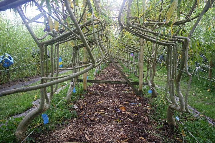 granja de árboles que crecen con forma de muebles