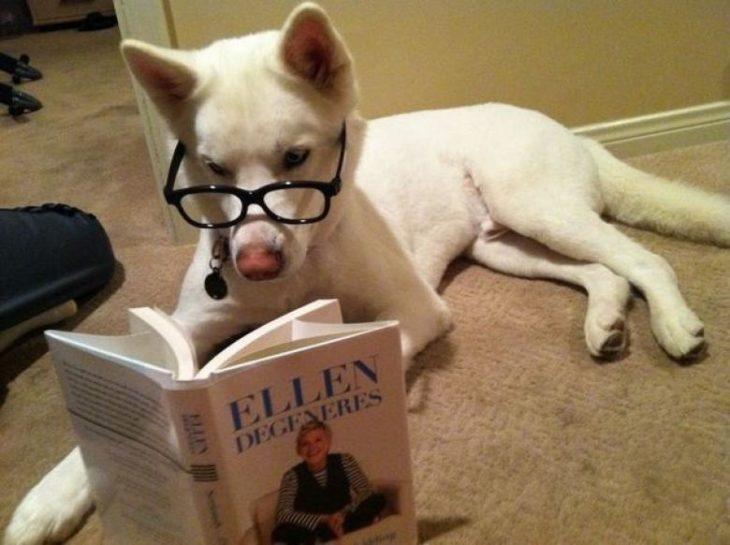 perro leyendo a ellen degeneres