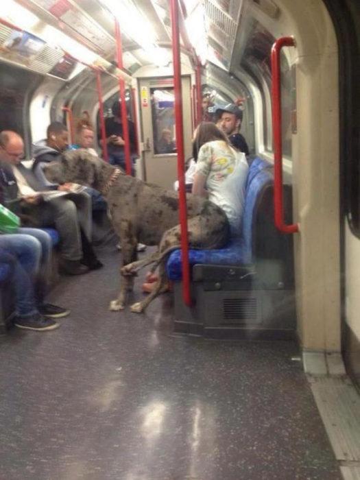perro sentado en el metro