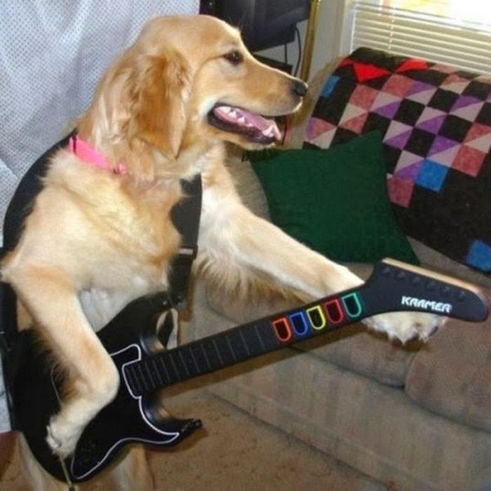 perro tocando la guitarra