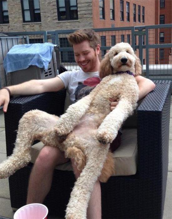 perro sentado como humano