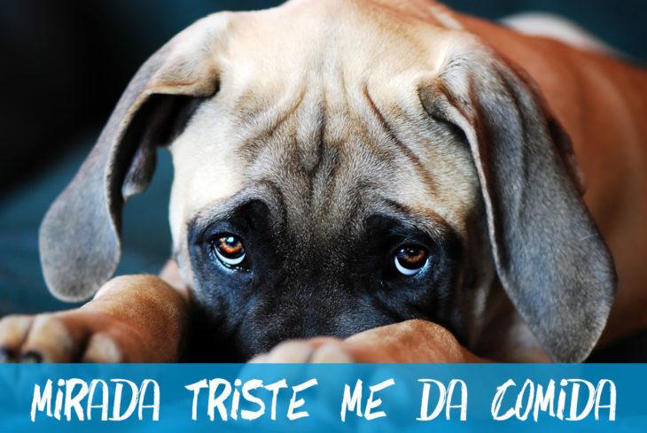 mirada triste de perro