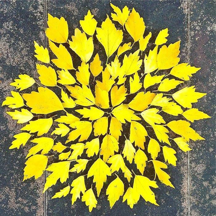 arte con hojas secas