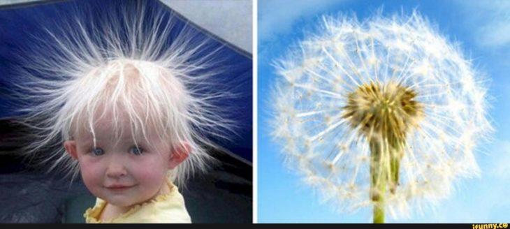 Un niño y una flor diente de león