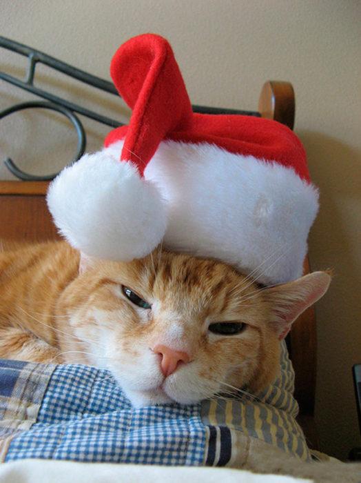 gato amargado en navidad