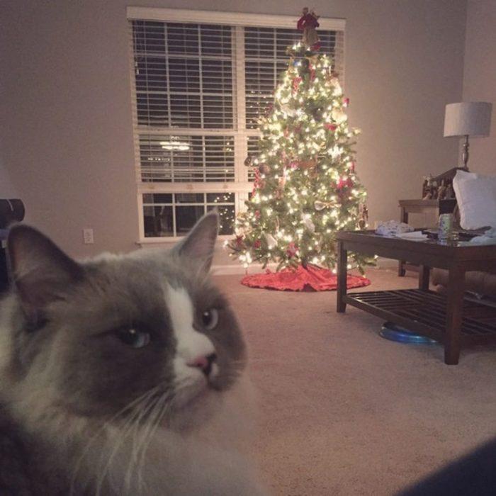 qato odia la navidad