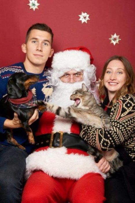 perro y gato peleando en navidad