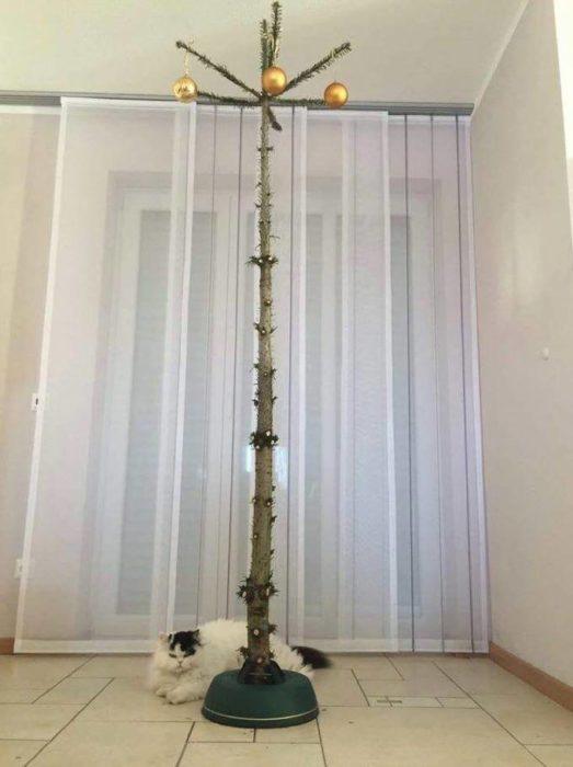gato destruye árbol de navidad